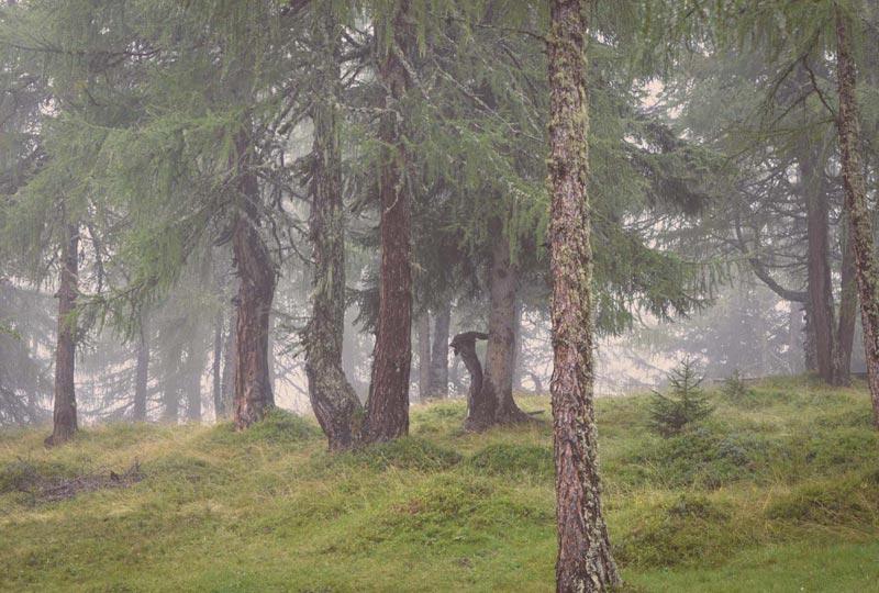 Wälder im Nebel...