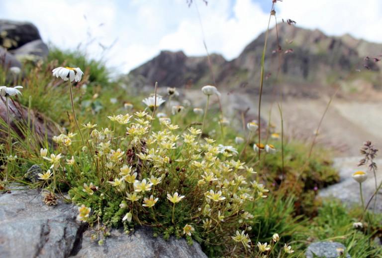 12 Blumen Stubai Wandern