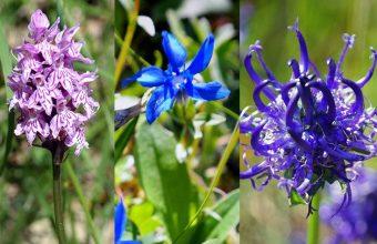 uli-eigentler-collage-pflanzen