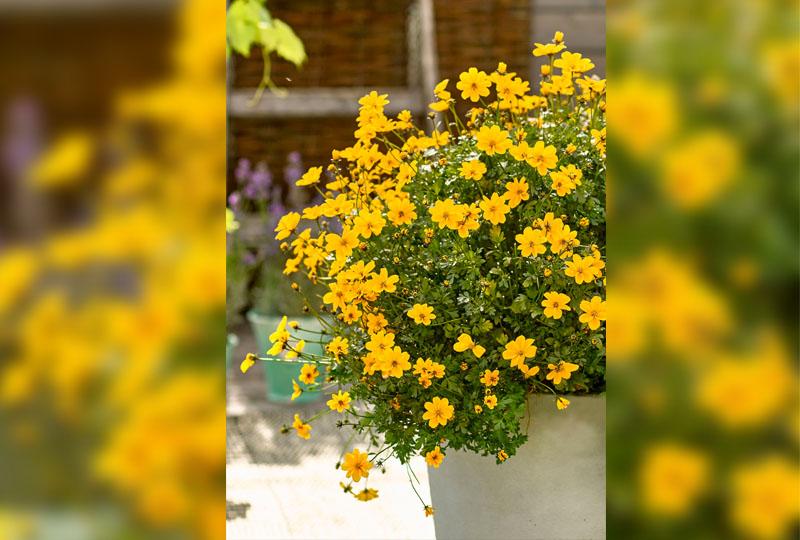 Wo Blumen Bluhen Lachelt Die Welt Stubai